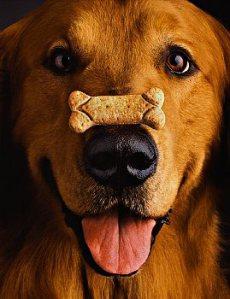 El funcionamiento de los premios para el adiestramiento de perros