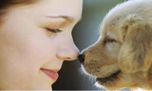 Vale la Pena adiestrar mi Perro? 5 Razones que te Convencerán