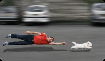 ¿Porque los perros tiran de la correa?