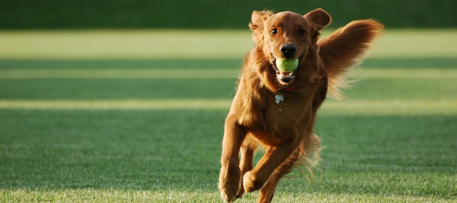 11 Ejercicios para Cambiar el Comportamiento de un Perro en Pocos Días