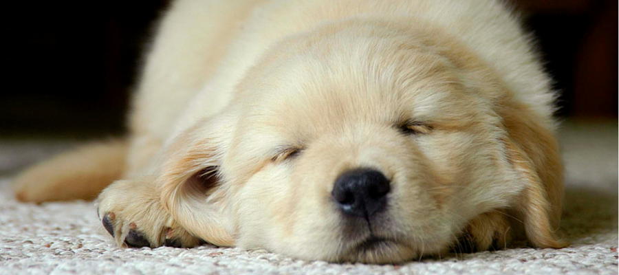 Como no Tener Problemas en Casa con un Perro