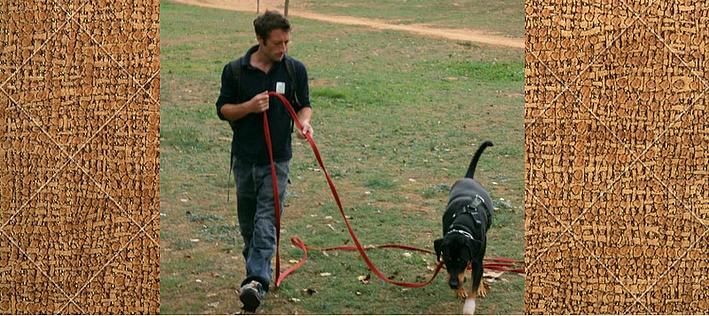 llamada-adiestrar-aprender-Perro-a-Venir-Cuando-se-le-Llama