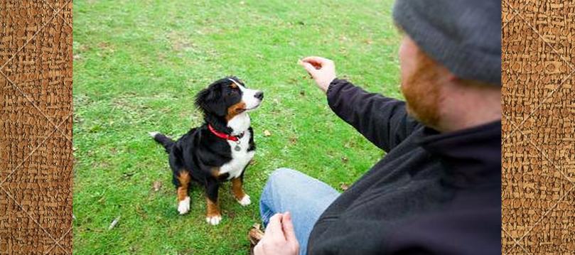 enseñar-perro-a-sentarse