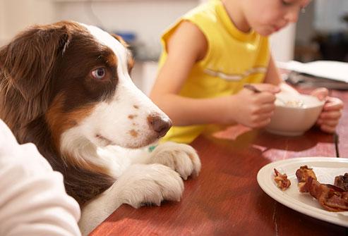 como-enseñar-perro-a-no-pedir-comida-en-la-mesa