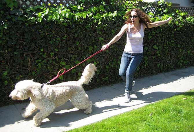 Adiestrar-un-Perro-a-no-Tirar-de-la-Correa-1