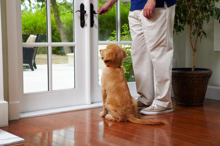 Como-Ensear-un-Cachorro-a-Hacer-sus-Necesidades-en-la-Calle