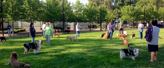 10 Trucos para Enseñar a un Perro a Obedecer en Presencia de otros Perros