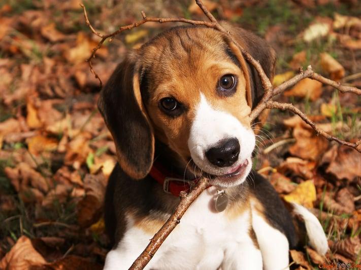 adiestrar-perro-soltar-una-pelota-objeto.jpg