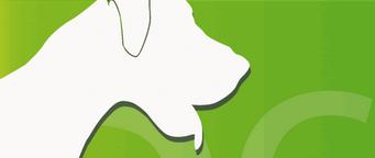 adiestrar-perros-canino-adiestramiento-cursos-online-cachorros