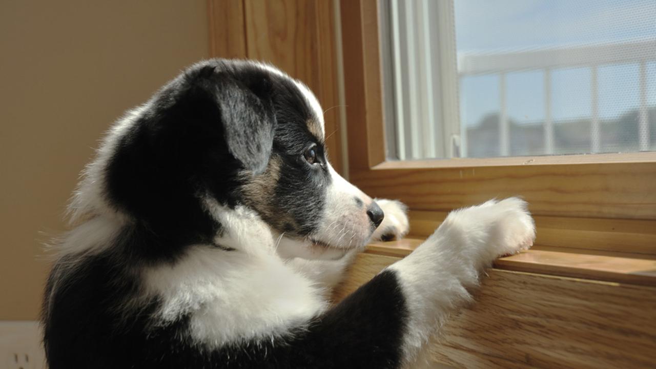 como-dejar-perro-solo-y-tranquilo-en-casa.jpg