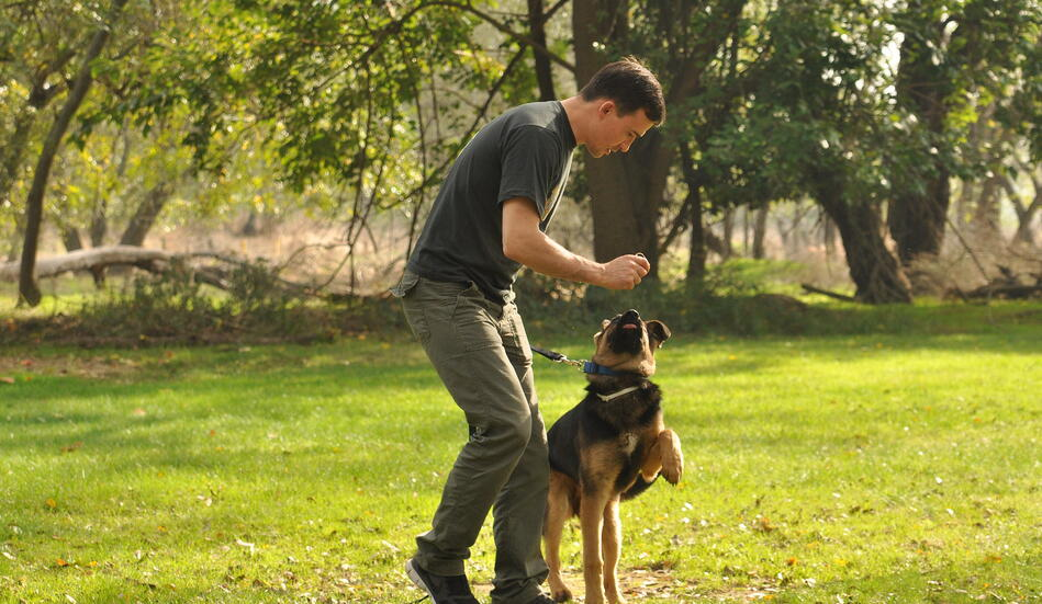 consejos-para-tener-un-perro-adiestrado