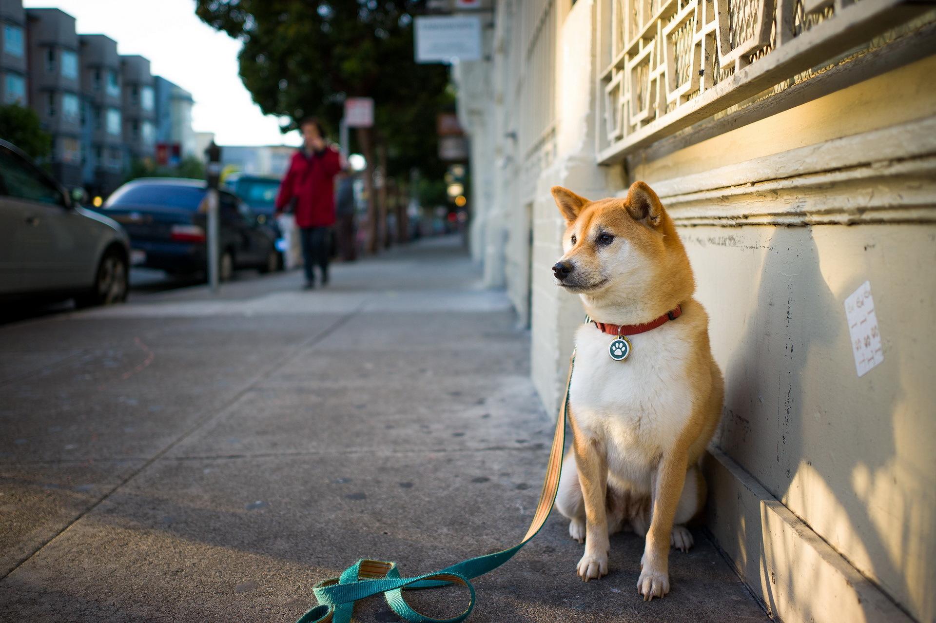 adiestrar-un-perro-a-sentarse-y-quedarse-quieto