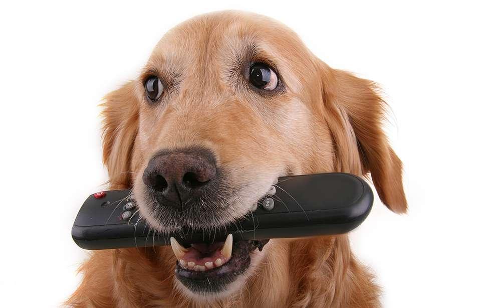 evitar-que-un-perro-robe-objetos.jpg