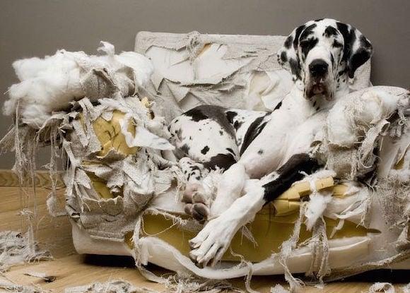 mi-perro-destroza-la-casa-causas-consejos.jpg