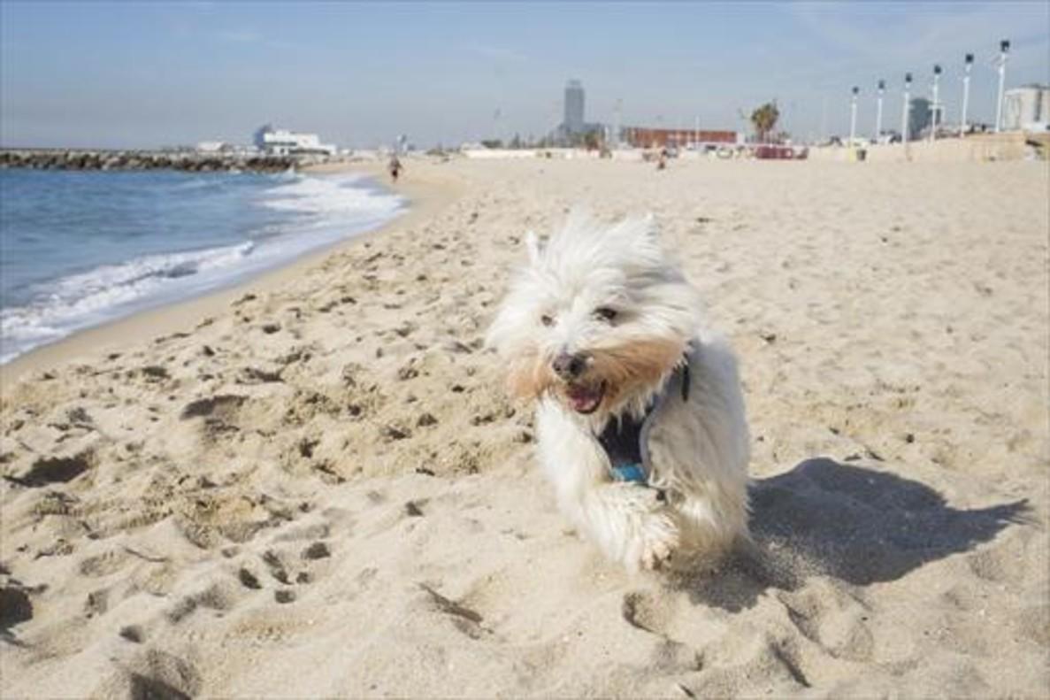 playa-para-llevar-perro-barcelona-Playa-de-les-Banyeretes-San-Pol-de-Mar.jpg