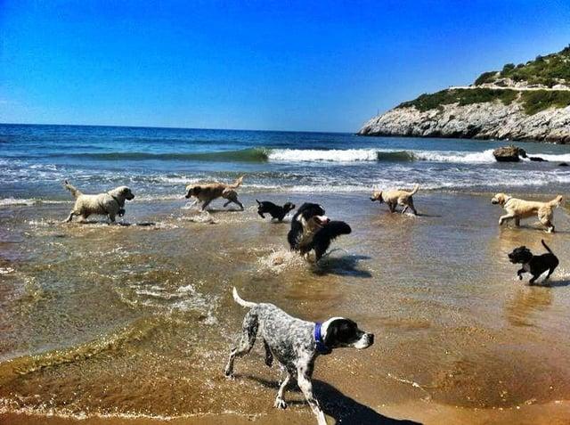 playa-para-perros-barcelona-alrededores-Cala-de-Vallcarca-Sitges.jpg