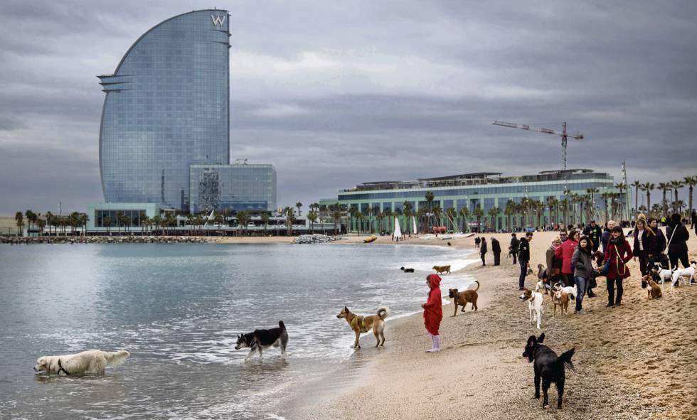 playa-permitida-para-perros-barcelona.jpg