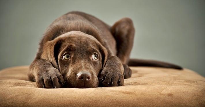 por-que-causas-perro-ansiedad-separacion.jpg