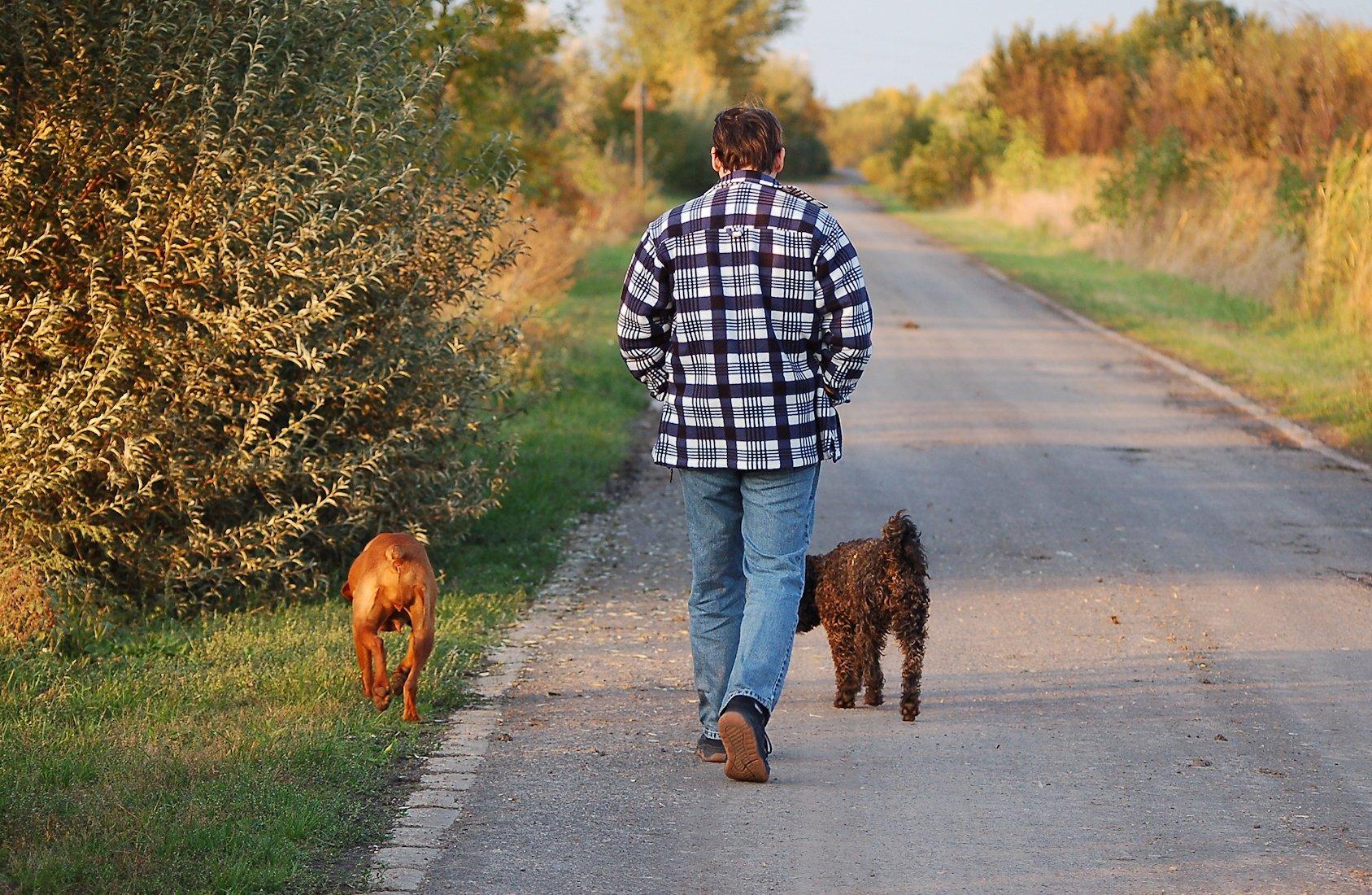Ventajas de enseñar a tu perro a andar a tu lado sin correa
