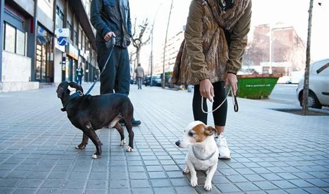 lugares-ideales-para-adiestrar-un-perro-en-barcelona